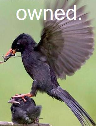 Owned Bird