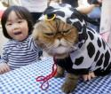 Cat in a Cow Outfit