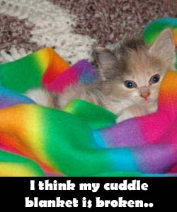 cuddle blanket cat